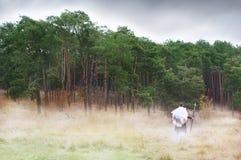 Antyczny wojownik z dzidy stojakami przed drewnami w mgle Fotografia Royalty Free