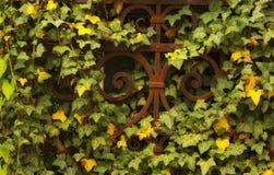 Antyka żelaza ogrodzenia abstrakt zdjęcia royalty free