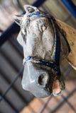 Antykwarski Carousel koń Obraz Stock