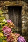 Antykwarski drewniany drzwi i hortensia Obraz Stock
