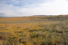 Antylopa maczka Dolinna rezerwa, Kalifornia, usa fotografia stock