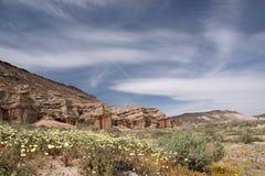 Antylopa maczka Dolinna rezerwa, Kalifornia, usa zdjęcia royalty free