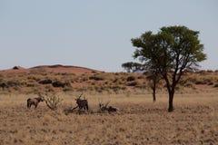 Antylopa w sawannie w Africa obraz stock