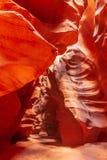 antylopy Arizona jar zdjęcie royalty free