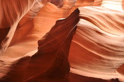 antylopy jaru pustyni wilk Fotografia Royalty Free