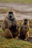 Anubis del papio del babuino con los cachorros Fotografía de archivo
