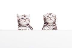 Anunciando seu produto do animal de estimação Fotografia de Stock Royalty Free