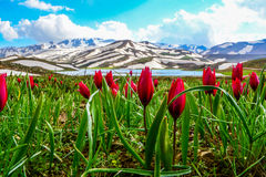 Anuncio de las bellezas de primavera y de las montañas nevosas Fotos de archivo libres de regalías