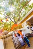 Anuradhapura Jaya Sri Maha Bodhi drzewa adoratorzy Zdjęcia Royalty Free