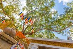 Anuradhapura Jaya Sri Maha Bodhi drzewa baza H Obraz Royalty Free