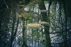 Använda gummihjul som översvämmas olagligt i ett skogdamm royaltyfria bilder