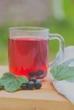 Användbart te som göras från den svarta vinbäret Royaltyfria Bilder