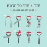 Anweisungen in, wie man eine Bindung auf dem Türkishintergrund der acht Schritte bindet Prinz Albert Knot Vektor Stockfotografie