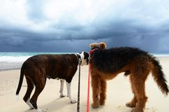 Anxiety Fear In Dogs On Beach Scared Of Dark Thunder Storm Stock Photos