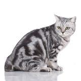 Anxious cat sideways isolated Stock Photos