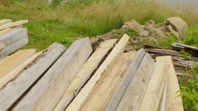 Anxious chipmunk of bunch planks stock footage