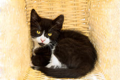 Anxious kitten in basket Royalty Free Stock Photos