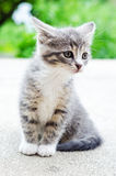 Anxious kitten Royalty Free Stock Photo