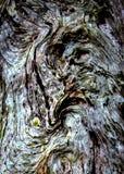 Anxious Tree Stock Photo