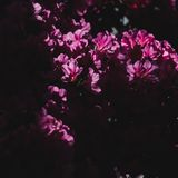 Violet flower under shadow and light royalty free stock photos