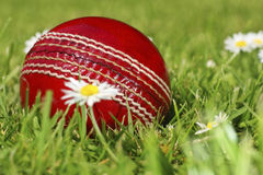 Anyone for cricket Royalty Free Stock Images
