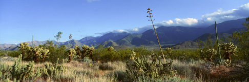 Anza-Borrego Desert State Park Royalty Free Stock Images