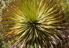anza borrego kaktusowe wieka pustyni rośliny Zdjęcie Stock