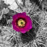 Anza Borrego. Natural beauty in Southern California stock photos