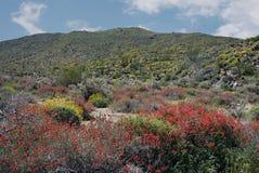 Anza-Borrego Wildflowers Β Στοκ Φωτογραφίες