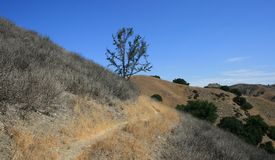 Anza Loop Lone Tree. Trail passing a lone tree on a hillside, California Stock Image
