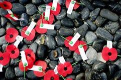 anzac πόλεμος επιμνημόσυνης δέησης ημέρας Στοκ εικόνες με δικαίωμα ελεύθερης χρήσης