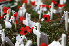 Free Anzac Day Poppies Royalty Free Stock Photography - 35116237