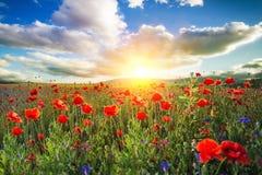Anzac. Day poppy sun armistice day background beautiful stock images