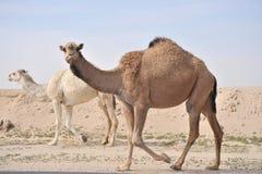 Anzeige der Wüste   Lizenzfreie Stockbilder