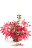 Anzeige von rotem Autumn Leaves in einem Korb Lizenzfreies Stockfoto