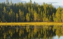 Anzeigen des Herbstwaldes im Wasser stockfoto