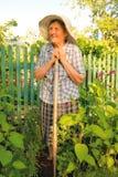 Anziana che lavora nel giardino Immagini Stock