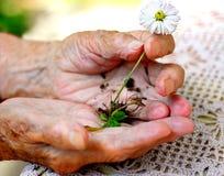 Anziana che tiene una pianta Fotografie Stock Libere da Diritti
