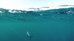 Anziehende Fische von einem Boot stock video