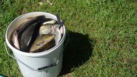 Anziehende Luft der Fische stock footage