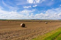 Août aux champs biélorusses - l'herbe ont été enlevées photo libre de droits