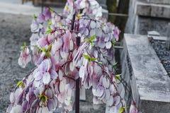 Août 2018 le Japon Inuyama Arbre de souhait au Japon près du temple, arbre de souhait japonais Texte en japonais photographie stock libre de droits