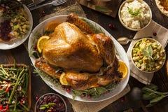Ação de graças caseiro inteira Turquia Fotografia de Stock