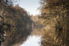 Ao longo do rio Derwent Imagem de Stock Royalty Free