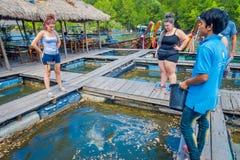 AO NANG, ТАИЛАНД - 19-ОЕ ФЕВРАЛЯ 2018: Внешний взгляд неопознанных людей подавая рыба на ресторане древесины рыб фермы Стоковое Фото