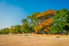 AO NANG TAJLANDIA, MARZEC, - 05, 2018: Niezidentyfikowani ludzie cieszy się widok plaża pod ogromnym kolorowym drzewem przy Obraz Royalty Free