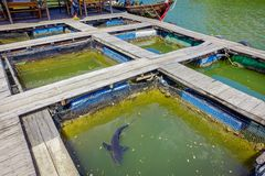 AO NANG, THAILAND - FEBRUARY 19, 2018: Outdoor view of Farm fish wood restaurant sea river with small pools with a shark. Living there at Krabi Thailand royalty free stock images