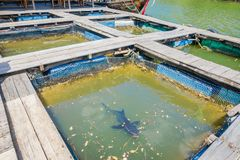 AO NANG, THAILAND - FEBRUARY 19, 2018: Outdoor view of Farm fish wood restaurant sea river with small pools with a shark. Living there at Krabi Thailand royalty free stock photo