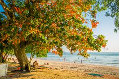AO NANG, THAILAND - MARCH 05, 2018: Unidentified man enjoying the view of the beach under a huge colorful tree at. Andaman Sea, South of Thailand Stock Photos