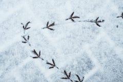 Ao pavimentar telha pegadas dos pássaros na neve fotos de stock